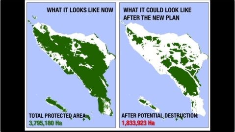 Aceh forest destruction